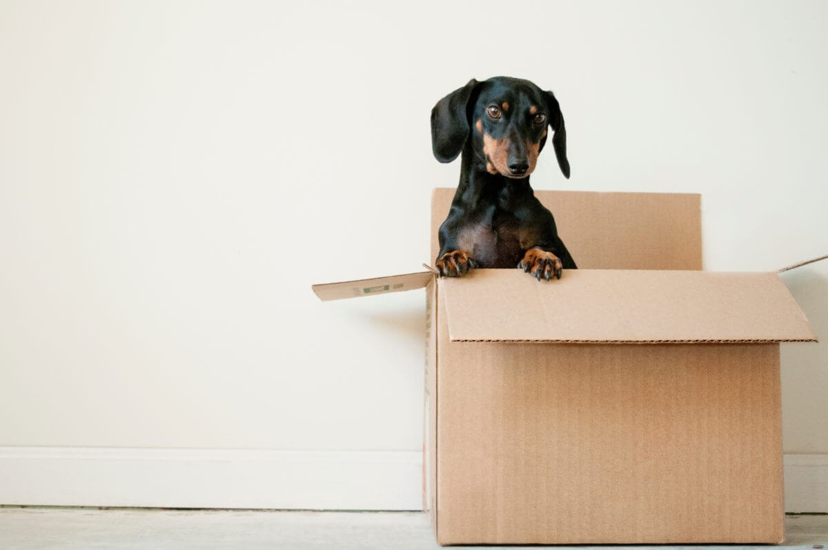 cute dog in open cardboard box